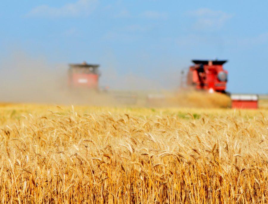 На27сентября собрано 123 млн тонн зерна— Минсельхоз