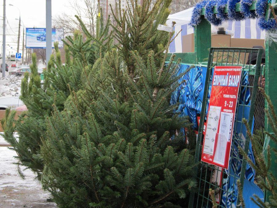 ВНовосибирск привезли тысячу новогодних елей