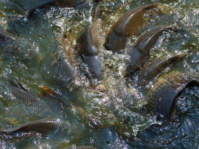 страхование аквакультуры