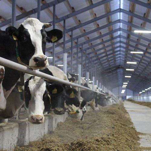 Россельхозбанк займет 19 млрд рублей на строительство молочного завода