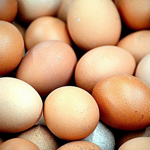 Птицефабрика из Кольцово вошла в тройку ведущих экспортеров яиц