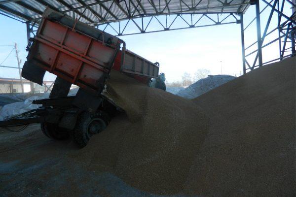 Цены на зерно в Новосибирске растут