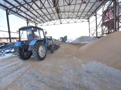 Новосибирская область увеличила экспорт зерна