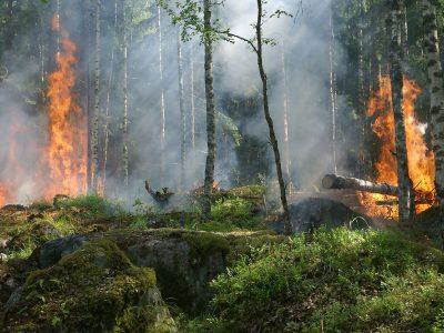 В регионе утвержден сводный план тушения лесных пожаров