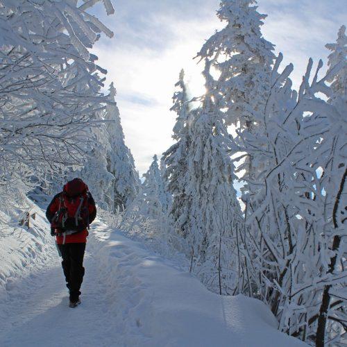 Новосибирск впервые вошел в топ-20 городов, которые интересовали иностранцев зимой