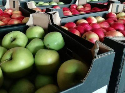 В Новосибирскую область пытались ввезти польские яблоки