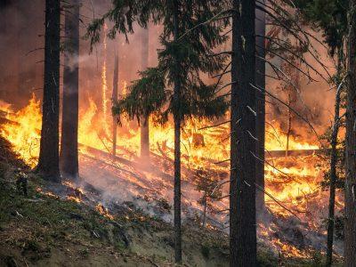 Чиновники в районах к пожарной безопасности подходят формально