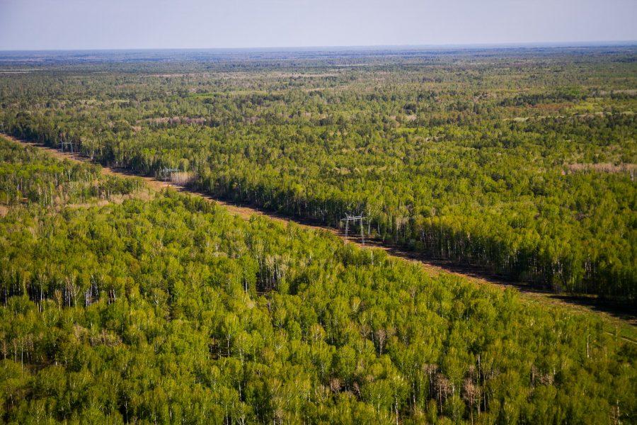 Лесной фонд Новосибирской области стал богаче на 20,8 тысяч гектаров