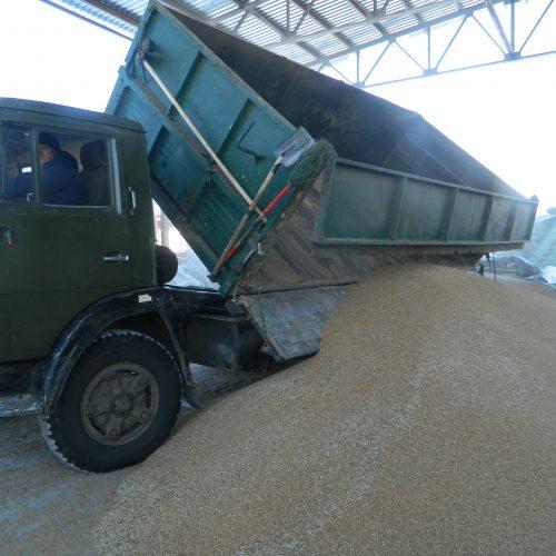 Более полутора тысяч вагонов зерна вывезено за пределы области