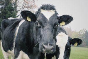 проблемы в животноводстве
