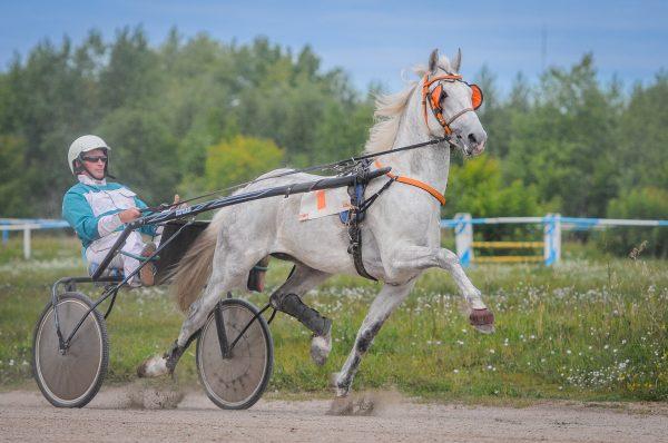 18 мая на Новосибирском ипподроме открывается летний беговой сезон