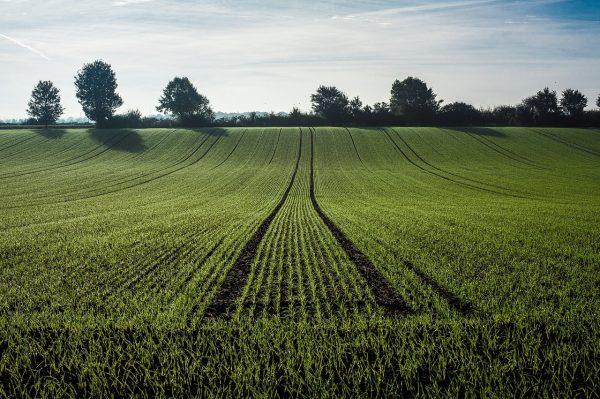 В регионе будет принят новый закон о господдержке сельхозпроизводителей