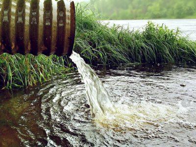В Новосибирске выясняют причину замора рыбы в реке Тула