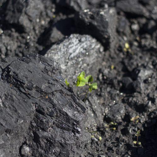 Образование золошлаковых отходов Новосибирской ТЭЦ-5 резко сократилось