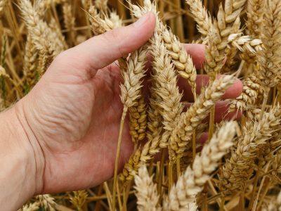 Новосибирские предприятия присоединились к Хартии в сфере оборота сельхозпродукции