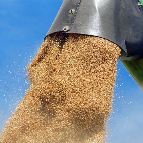 Новосибирская область отправила на экспорт более 100 тысяч тонн зерна и продуктов переработки