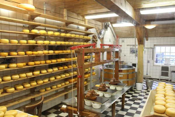 В Новосибирске резко выросло производство сыра, сухого молока и хлеба