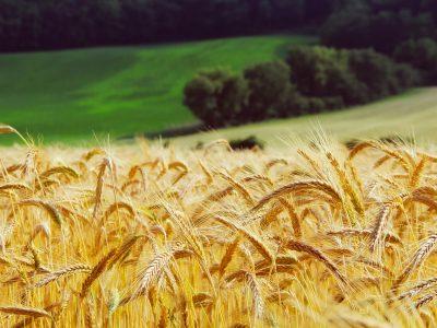 Аграрии Сибири в четыре раза увеличили страхование ярового сева