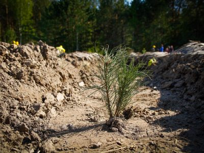 S7 Airlines завершила сбор средств на посадку одного миллиона деревьев в Сибири