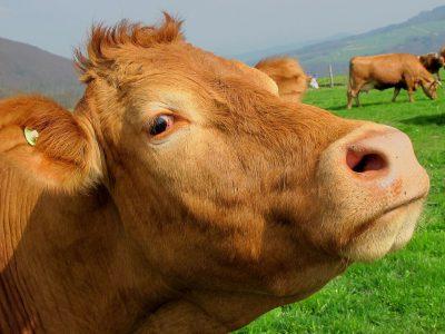Минсельхоз предлагает гранты для фермеров и сельхозкооперативов