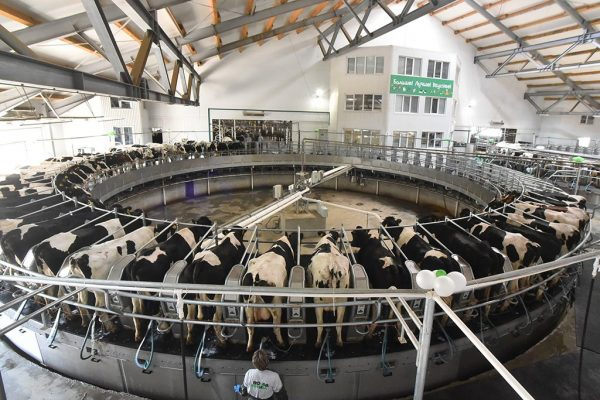 «АльфаСтрахование» застраховала животных «Сибирской Нивы» на 232 млн руб.