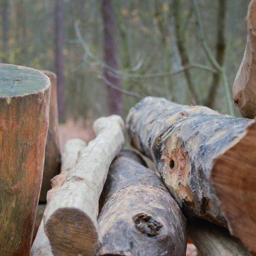 Лесорубам-нелегалам штрафов недостаточно