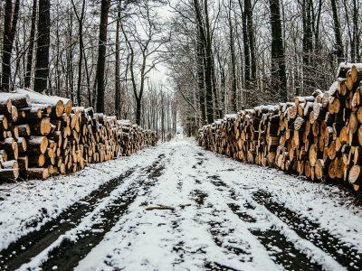 В Новосибирске направлено в суд уголовное дело о контрабанде леса на 257 млн рублей