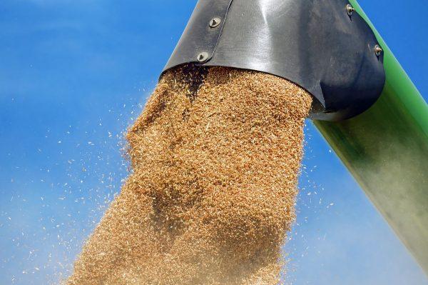 Экспорт зерна из Новосибирской области вырос на 60%
