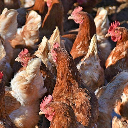 «Новосибирская птицефабрика» оштрафована за порчу земли