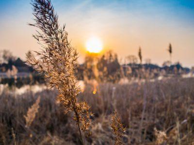 Штраф в 200 тысяч заплатит организация за зарастание сельхозугодий