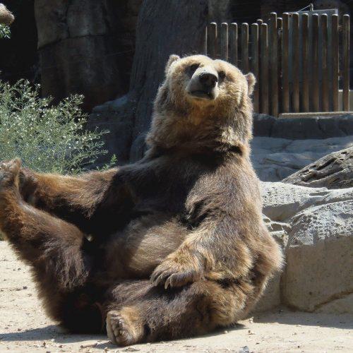 Зоопарк единороссов, добавка к электорату и псевдоскупка голосов
