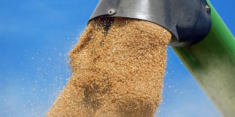 Погрузка зерна в Новосибирском регионе ЗСЖД в 2020 году увеличилась более чем на 8%