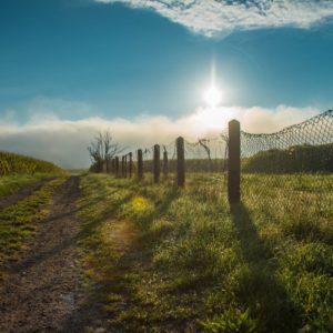 В 2020 году в Новосибирской области спрос на земельные участки вырос на 51%