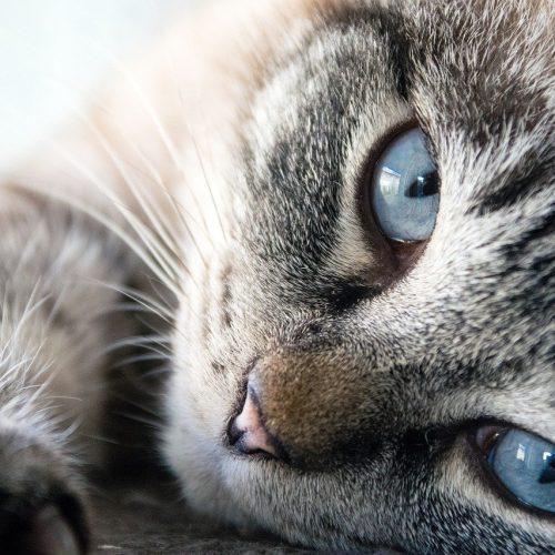 Новосибирцы стали чаще обращаться к ветеринарам через телемедицину