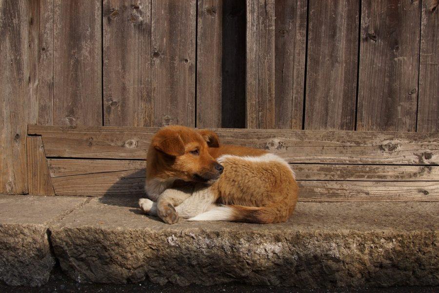 Депутаты настаивают на ужесточении ответственности владельцев домашних животных