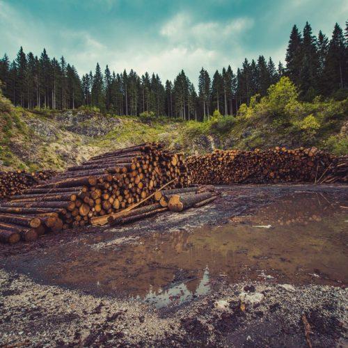 В Сибири в 2 раза выросло число уголовных дел по контрабанде леса