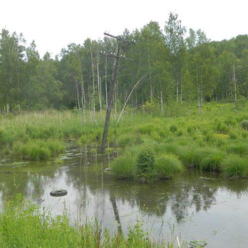 57 га лесов перешло в собственность Новосибирска в 2020 году