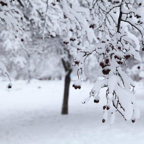 Синоптики предупредили об очередном похолодании в Новосибирске