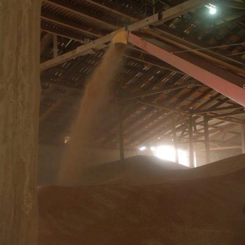 Из Новосибирская в Турцию по железной дороге отправлена первая партия пшеницы