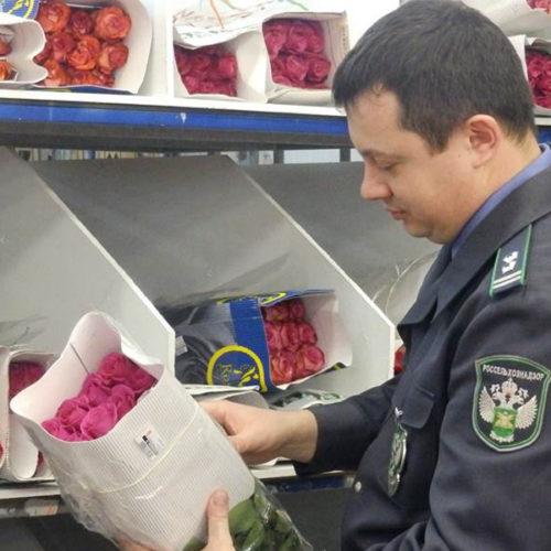Владельцы цветочного бизнеса опасаются задержек на таможне