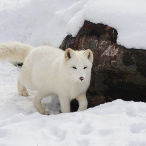 Ученые усилят контроль за месторождениями и лесами Сибири