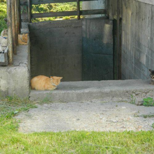 К чему обяжут кошатников?