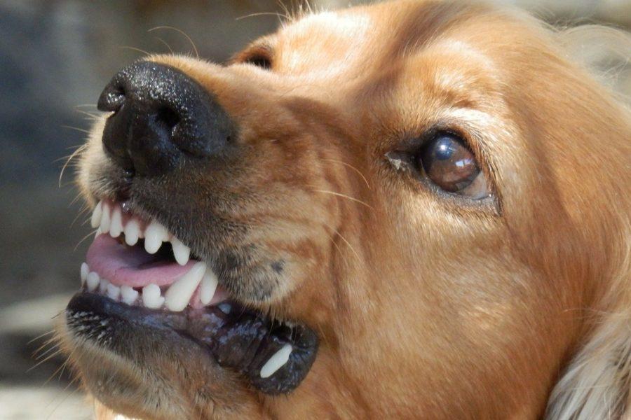 Сколько еще детей должны покусать собаки на улицах, чтобы 498-ФЗ был доработан?