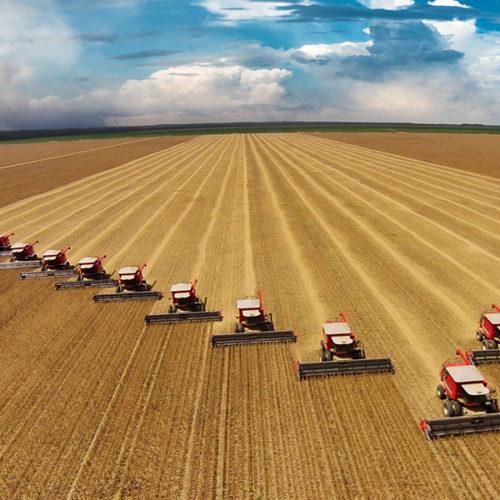 «Новосибирскхлебопродукт» начал поставлять муку в страны Юго-Восточной Азии