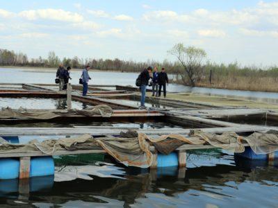 Новосибирские предприниматели вывели новый рыбный гибрид