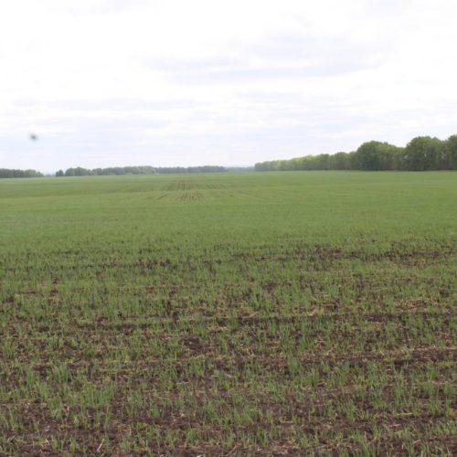 Новосибирские аграрии просят провести новую переоценку земли